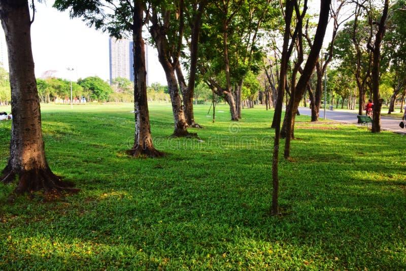 Arbres et pelouses vertes en parc photographie stock libre de droits
