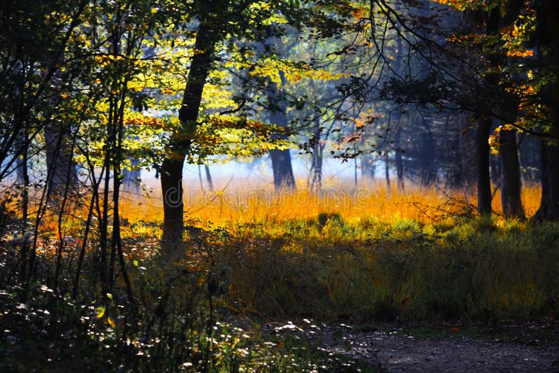 Arbres et pré dans une clairière d'isolement d'or lumineux rougeoyant de forêt allemande en soleil d'automne d'après-midi - Brügg photos stock