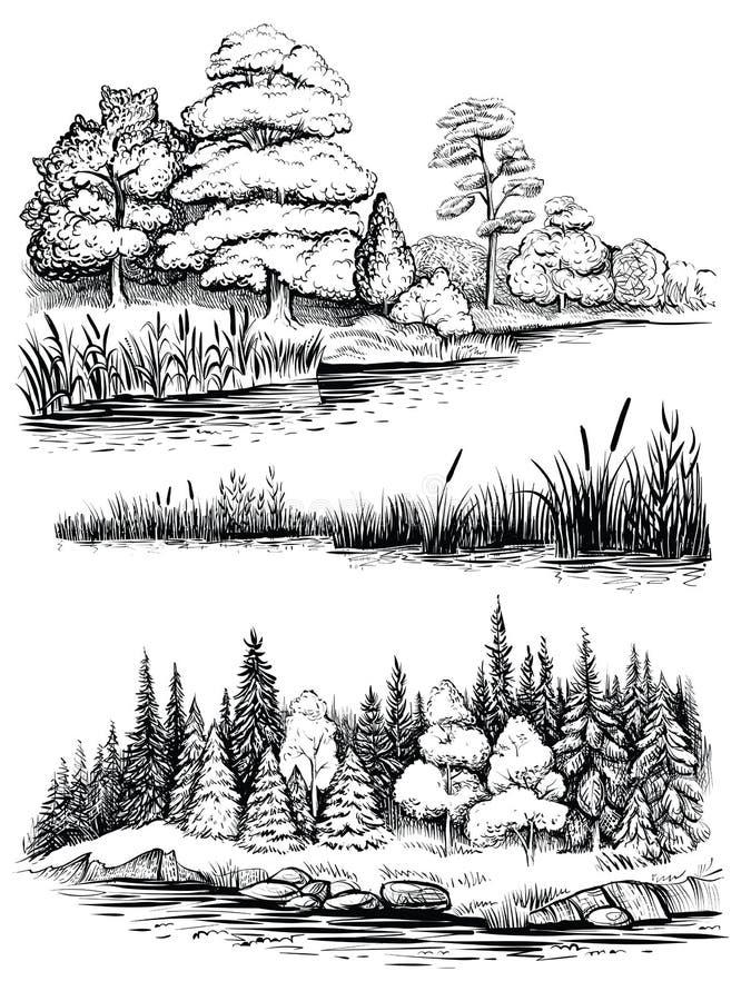 Arbres et réflexion de l'eau, ensemble d'illustration de vecteur Paysage avec la forêt, croquis tiré par la main