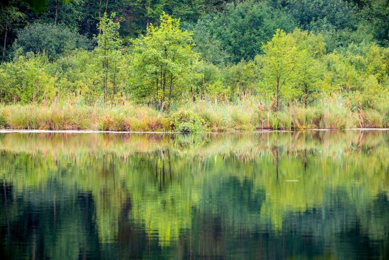 Download Arbres et réflexion de lac image stock. Image du saisonnier - 77158259