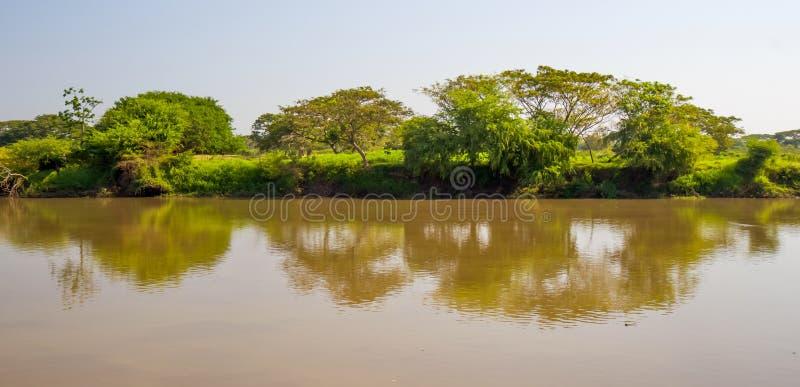 Arbres et rivière photo libre de droits