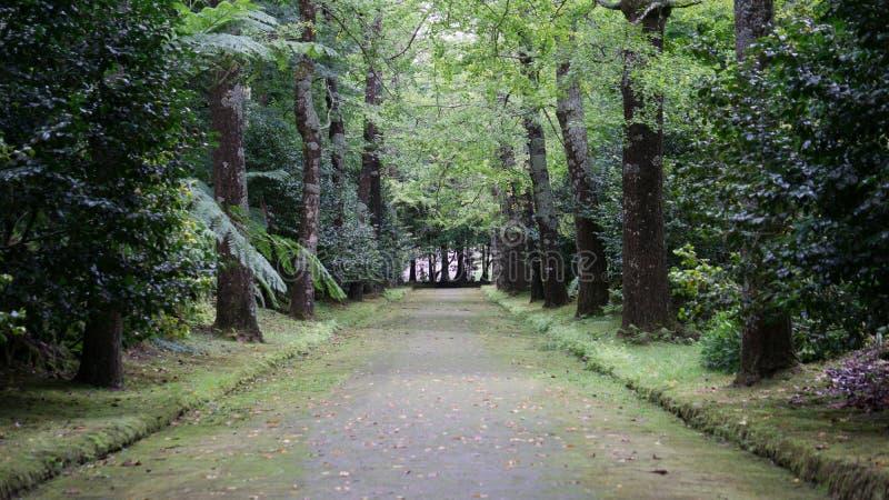 Arbres et route dans le sao Miguel, Açores photos stock