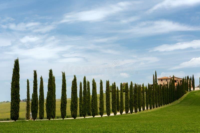 Arbres et villa de Cypress images stock