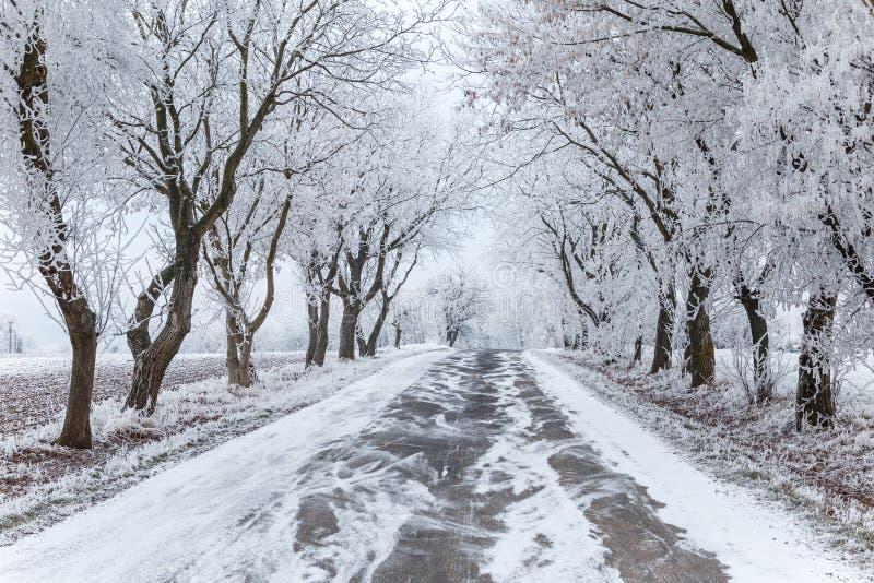 Arbres et voie urbaine congelés d'hiver images stock