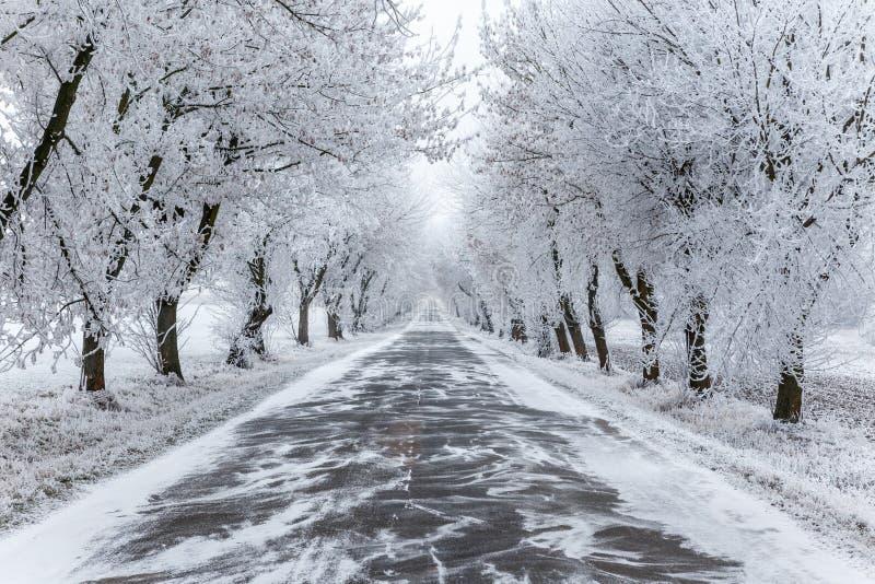 Arbres et voie urbaine congelés d'hiver image libre de droits