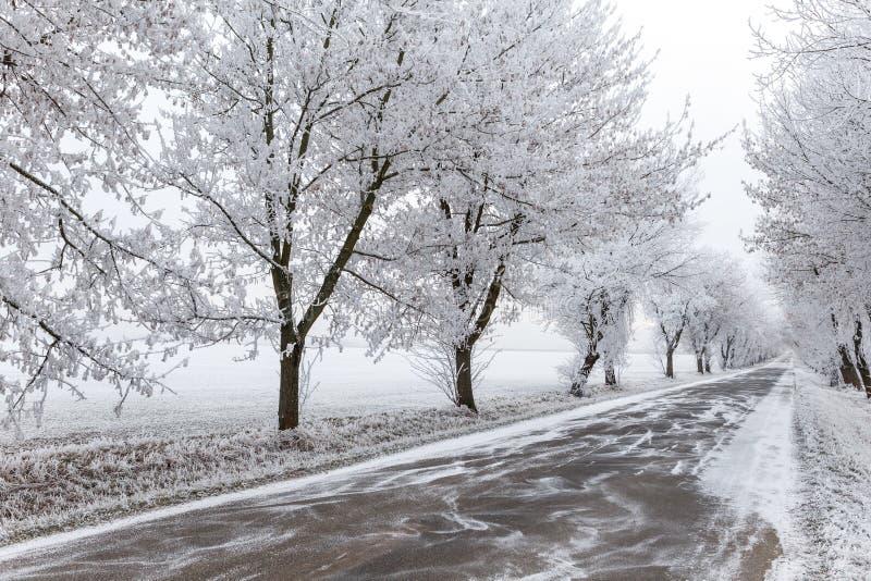 Arbres et voie urbaine congelés d'hiver photos stock