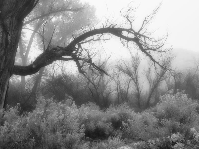 Arbres fantasmagoriques et brouillard photos stock