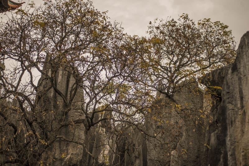 Arbres forestiers en pierre photographie stock