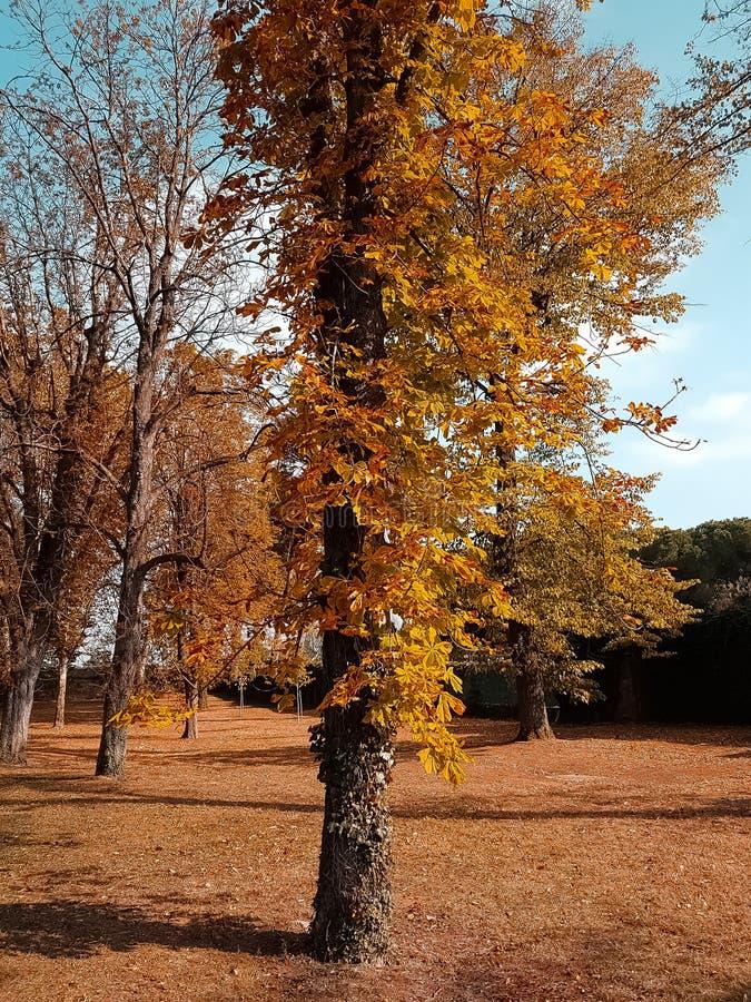 Arbres forestiers et feuilles d'automne jaunes et rouges colorées au ciel de lumière du jour avec des rayons de fusée du soleil v images stock