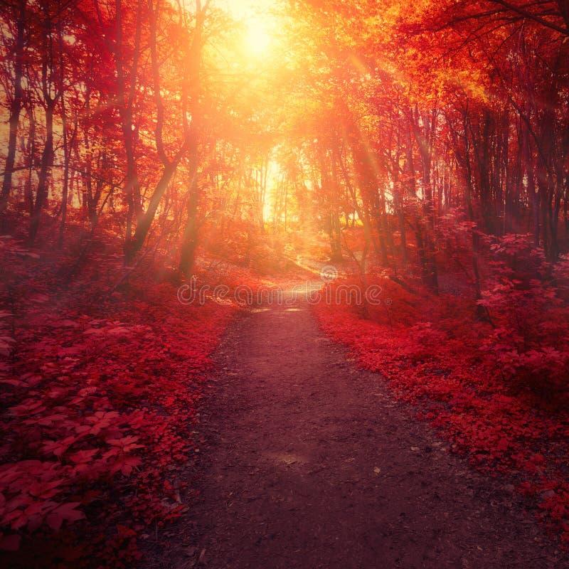 Arbres forestiers et lumière rouges du soleil photo stock