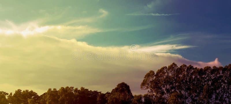 Arbres forestiers Milieux en bois verts de lumi?re du soleil de nature photographie stock