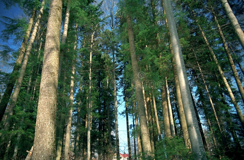 Arbres forestiers verts photographie stock