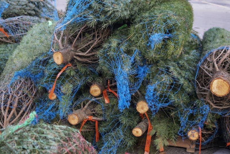 Arbres frais vivants de Douglas Fir Christmas dans la fabrication sur une palette à ajouter au sort d'arbre de Noël photo stock