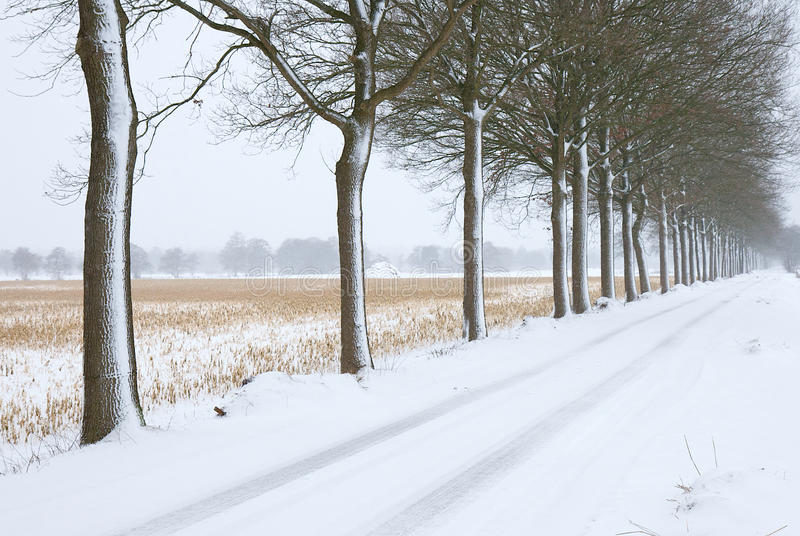 Arbres froids photo stock