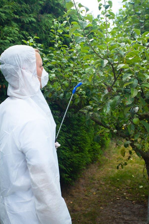 Arbres fruitiers de pulvérisation de jardinier photographie stock