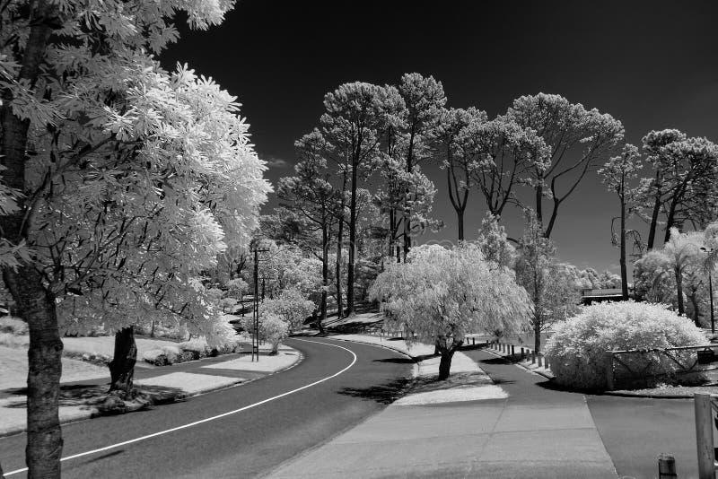 Arbres grands intermédiaires d'une route en noir et blanc pris avec dans image stock