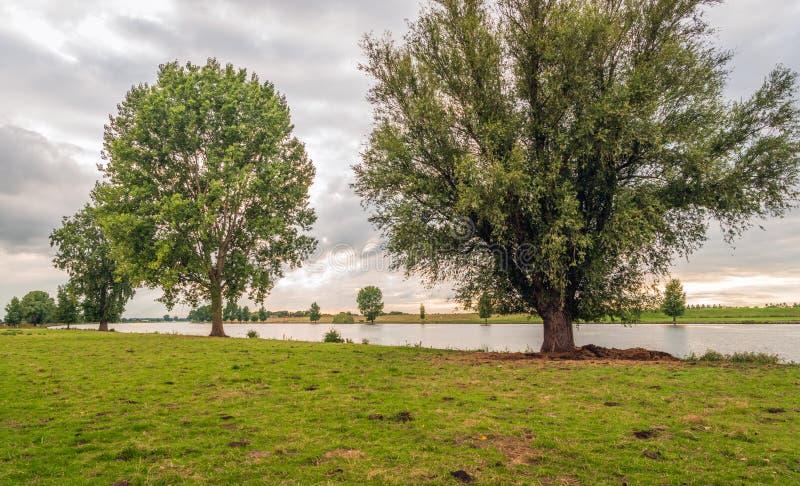 Arbres grands le long des banques d'une rivière néerlandaise photo stock