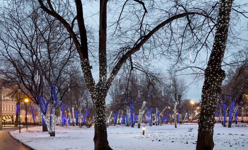 Arbres illuminés aux vacances de Noël la nuit images stock