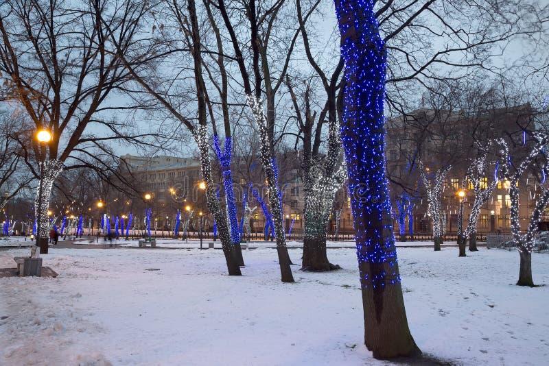 Arbres illuminés aux vacances de Noël la nuit photographie stock libre de droits