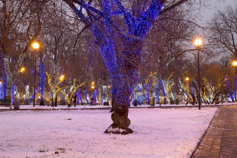 Arbres illuminés aux vacances de Noël la nuit photos libres de droits