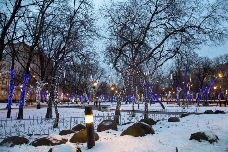 Arbres illuminés aux vacances de Noël la nuit image stock