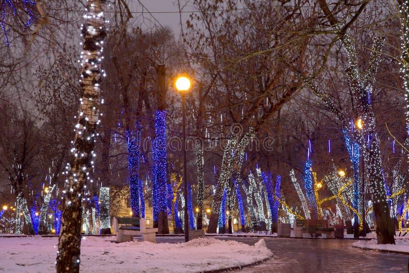 Arbres illuminés aux vacances de Noël la nuit photos stock