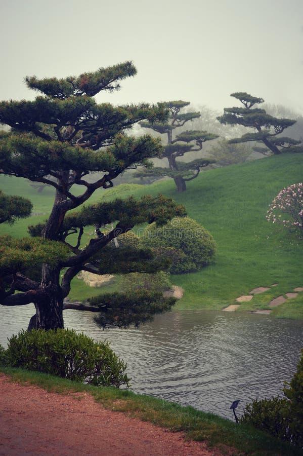 Arbres japonais de bonsaïs de jardin images libres de droits