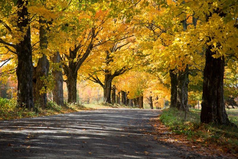 Arbres jaunes au-dessus d'une route rurale photographie stock