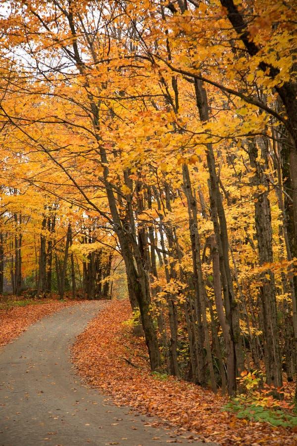 Arbres jaunes au-dessus d'une route rurale images stock