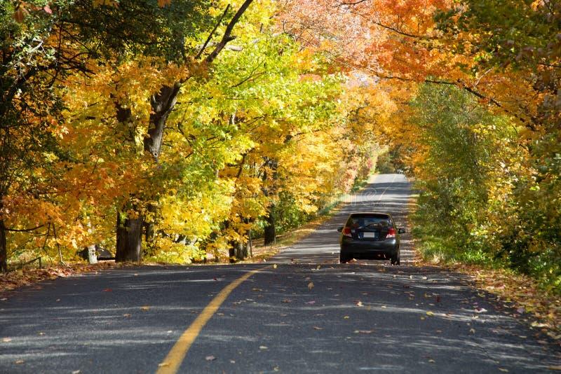 Arbres jaunes au-dessus d'une route rurale photo libre de droits