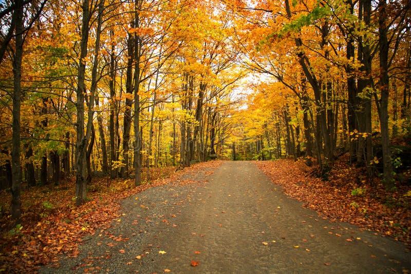 Arbres jaunes au-dessus d'une route rurale photographie stock libre de droits