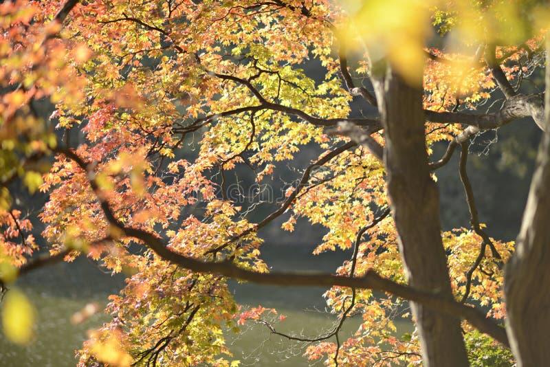 Arbres jaunes d'automne photographie stock libre de droits