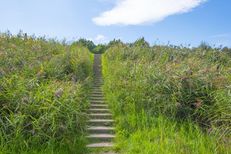 Arbres le long d'un chemin en parc naturel en été photographie stock libre de droits