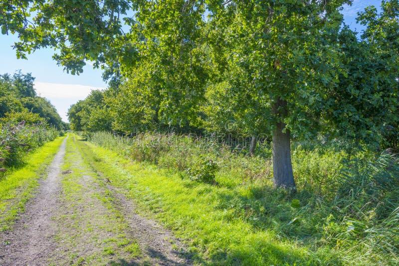 Arbres le long d'un chemin en parc naturel en été photos stock