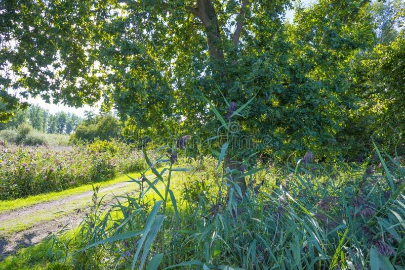 Arbres le long d'un chemin en parc naturel en été image libre de droits