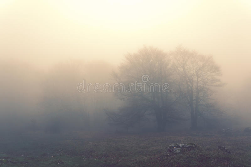 Arbres le matin et l'effet de vintage photographie stock libre de droits