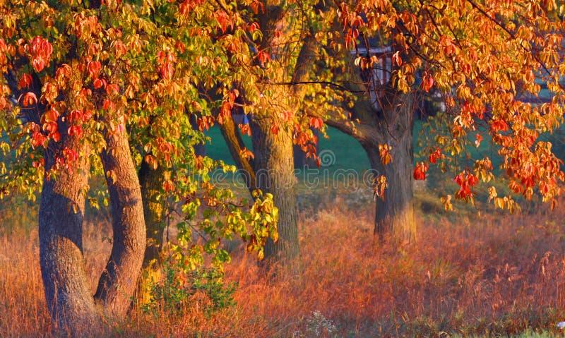 Arbres lumineux d'automne photos stock