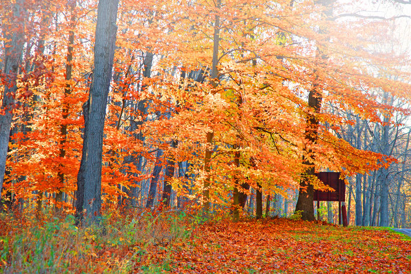 Arbres lumineux d'automne image stock
