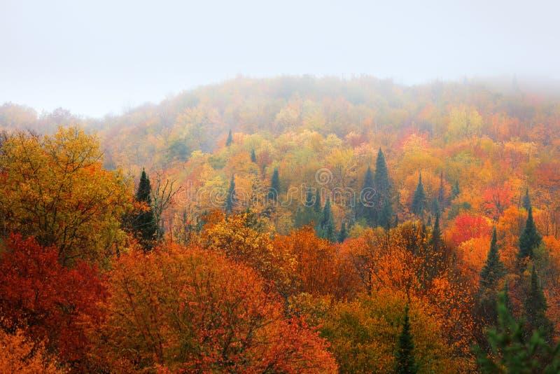 Arbres lumineux d'automne attrapés en brouillard photographie stock libre de droits