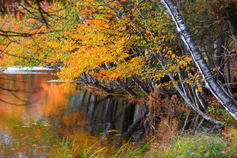 Arbres lumineux d'automne par le courant de l'eau photo stock