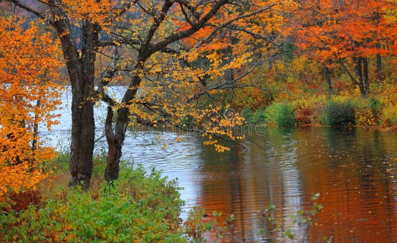 Arbres lumineux d'automne par le courant de l'eau images stock