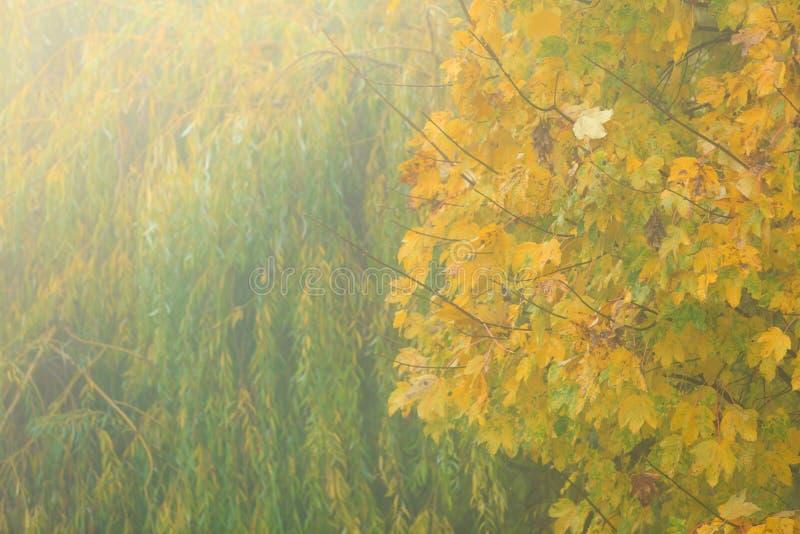 Arbres lumineux de chute de feuilles d'automne en parc photos stock