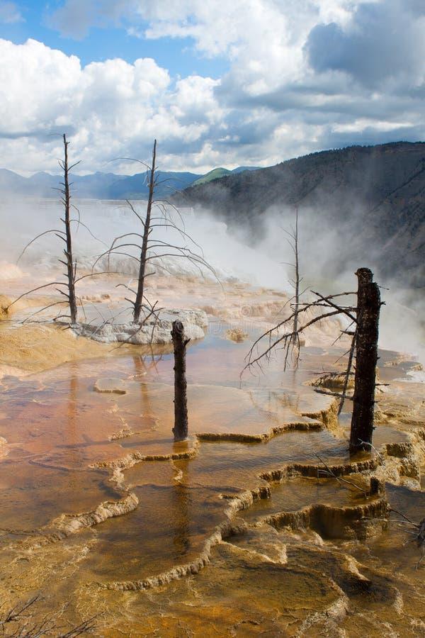 Arbres morts chez Mammoth Hot Springs, Yellowstone photos libres de droits
