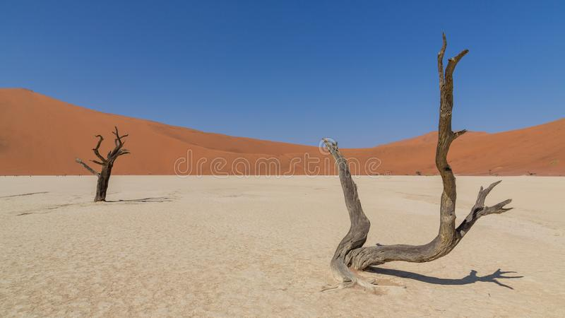 Arbres morts d'acacia dans DeadVlei, Sossusvlei, Namibie photos stock