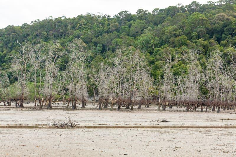 Download Arbres Morts En Plage à Marée Basse Image stock - Image du earth, île: 56487453