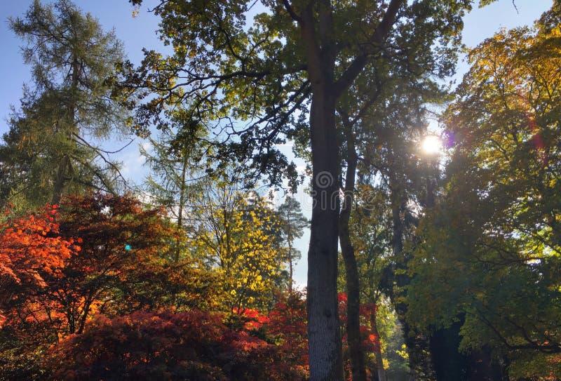 Arbres multicolores avec le ciel photo libre de droits