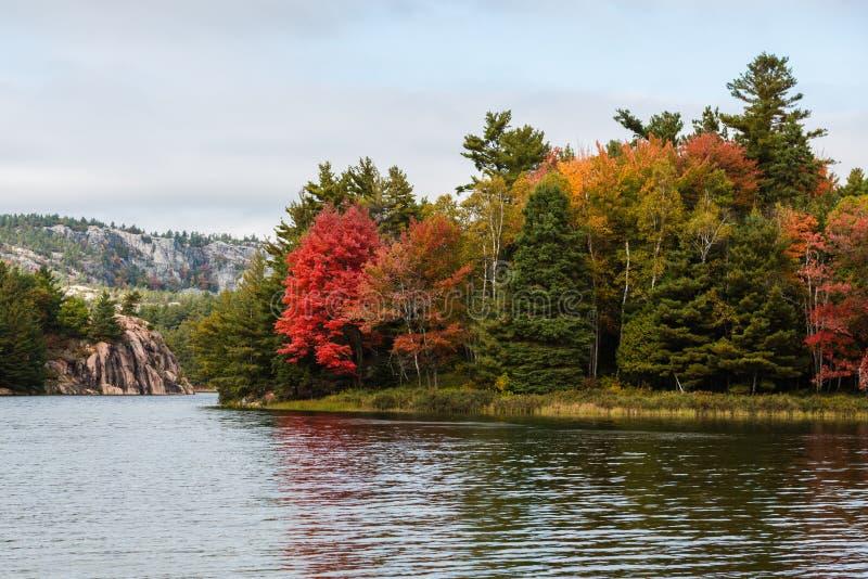 Arbres multicolores de chute à un bord de lac de Killarney image stock