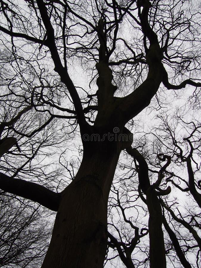 Arbres noirs tordus d'hiver contre un ciel gris images stock