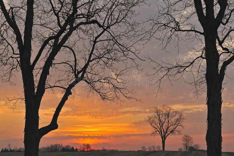 Arbres nus au lever de soleil images libres de droits