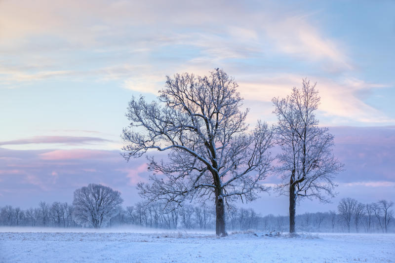 Arbres nus de l'hiver à l'aube photos libres de droits